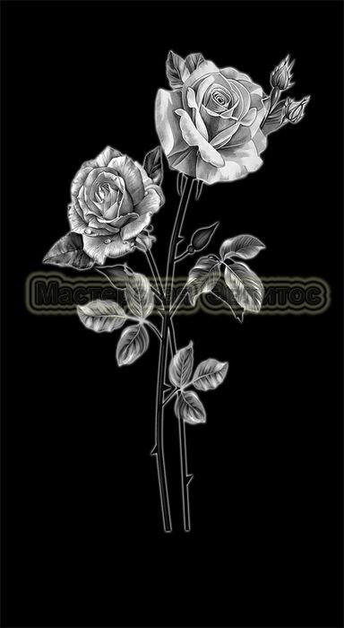 Розы №22 в Томске