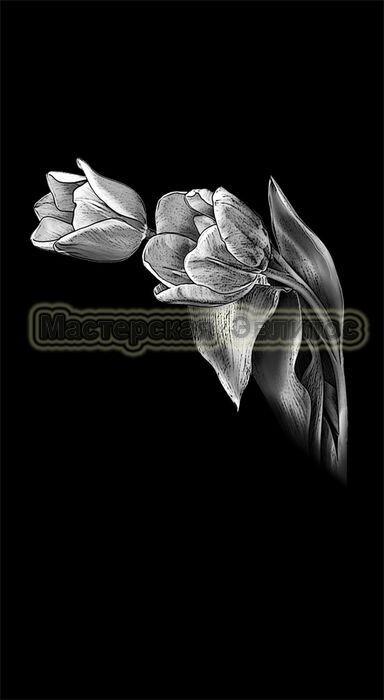 Тюльпаны №6